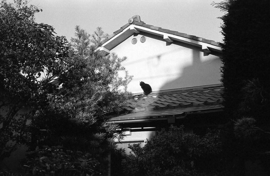 猫センサーの感度は今日も良好|Leica M3 + C Sonnar T* 1.5/50 ZM + FKodak TRI-X 400