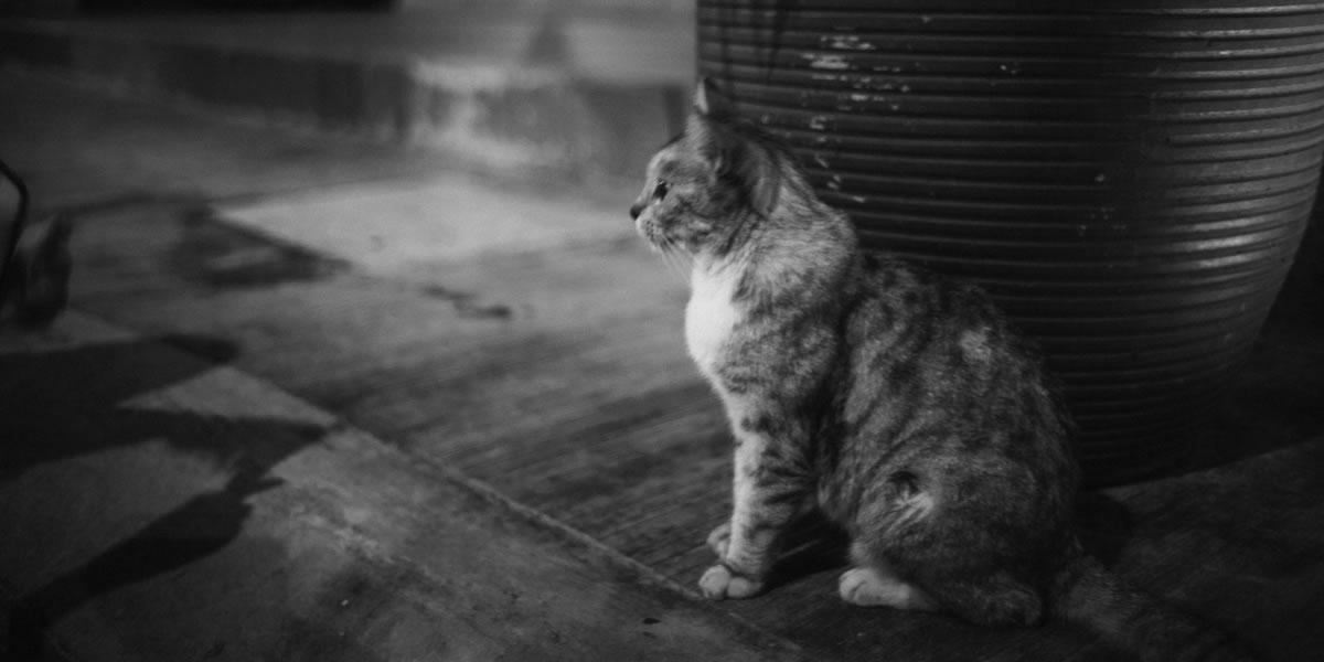 クアラルンプールの猫と出会う|Leica M10 + Summilux 35mm f1.4