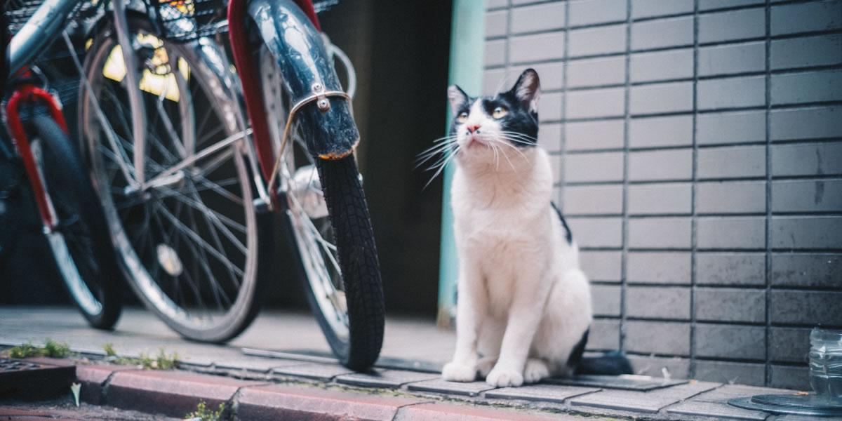 猫が元気な街は良い街、蒲田|Leica M10 + Summilux 35mm f1.4