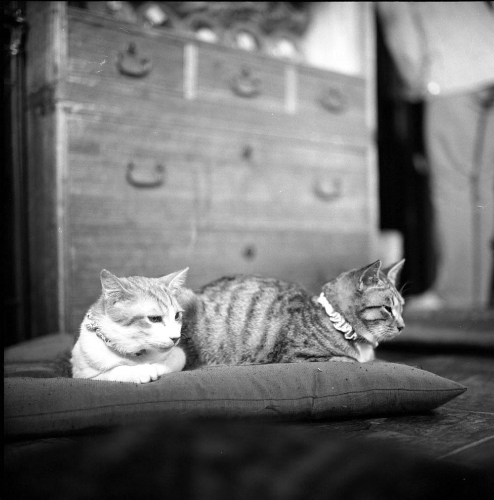 ゆっくりくつろぐ要にゃんこ亭の猫たち|ROLLEIFLEX 2.8F + ILFORD HP5 PLUS