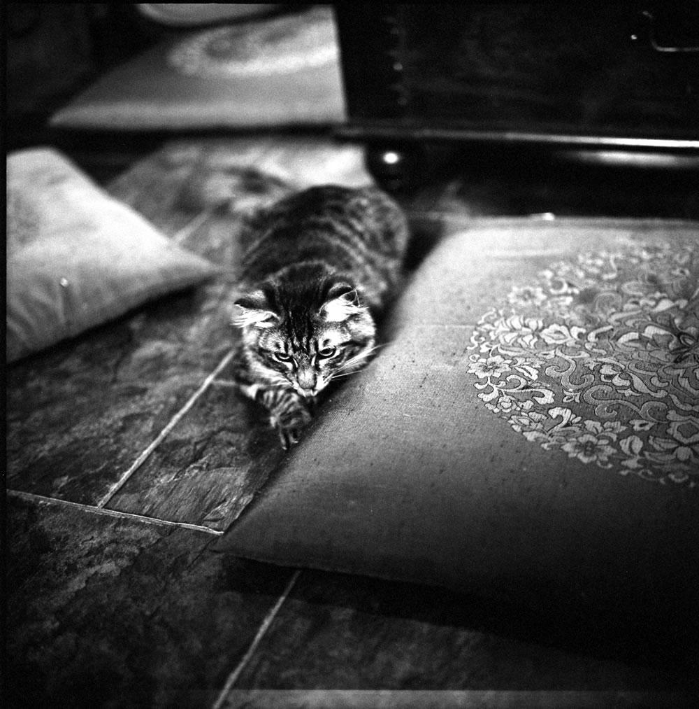 ゆっくりくつろぐ要にゃんこ亭の猫たち②|ROLLEIFLEX 2.8F + ILFORD HP5 PLUS