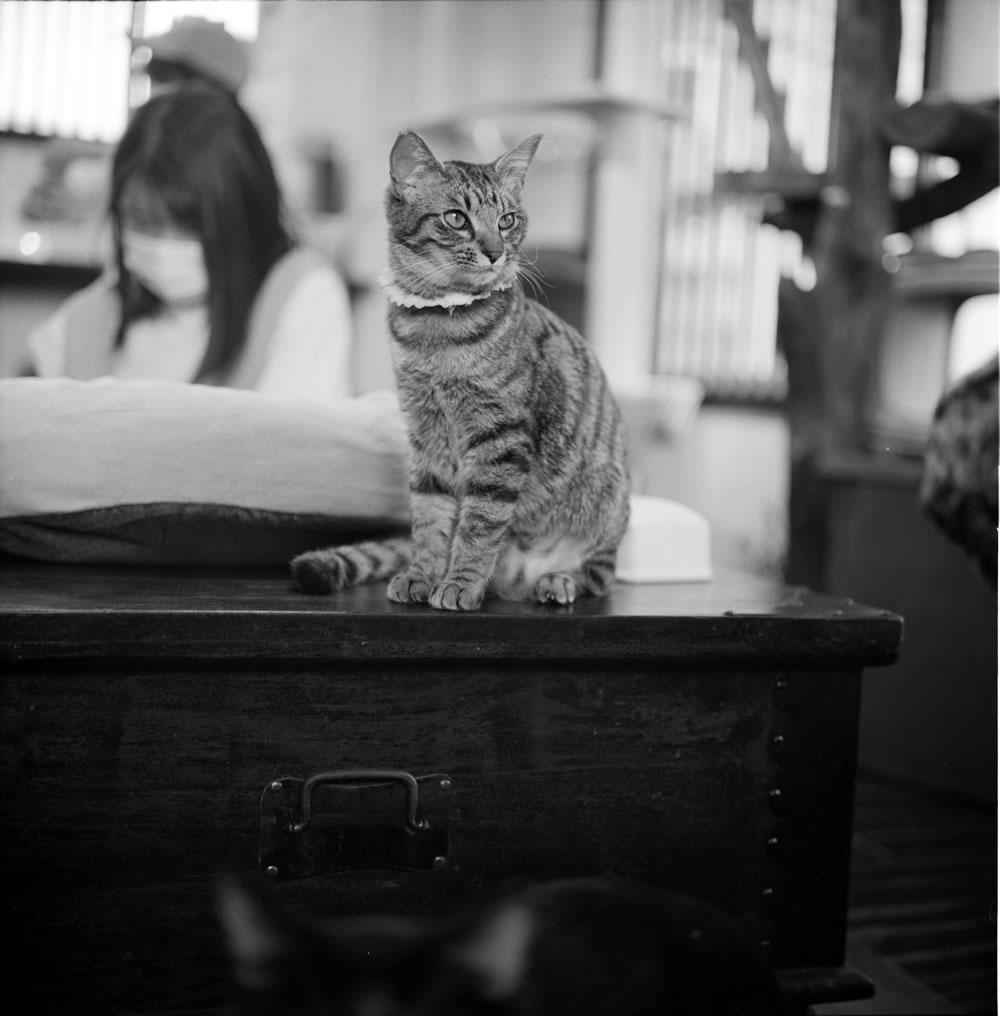 ゆっくりくつろぐ要にゃんこ亭の猫たち③|ROLLEIFLEX 2.8F + ILFORD HP5 PLUS