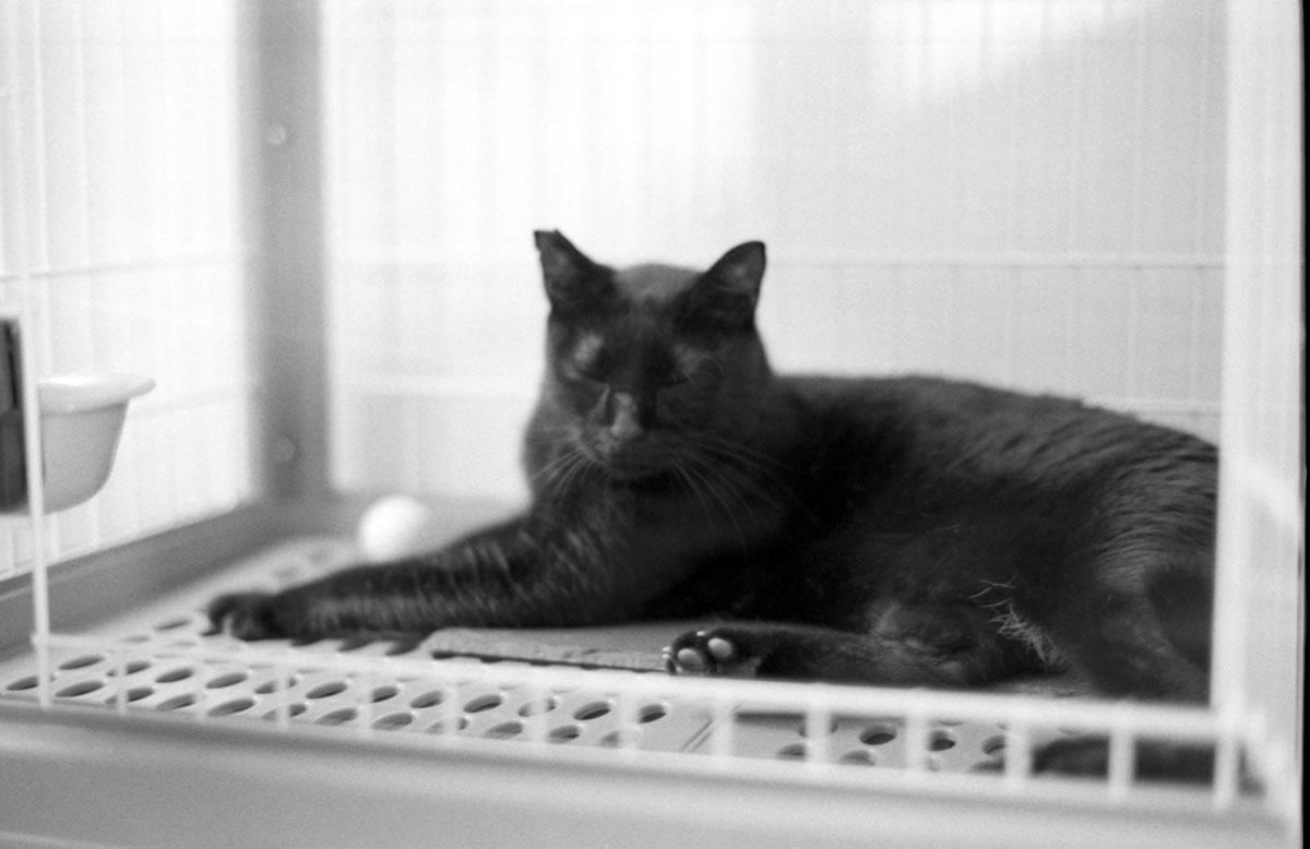 黒猫氏同様、レンズもご縁 Leica M3 + C Sonnar T* 1.5/50 ZM + ILFORD HP5 PLUS