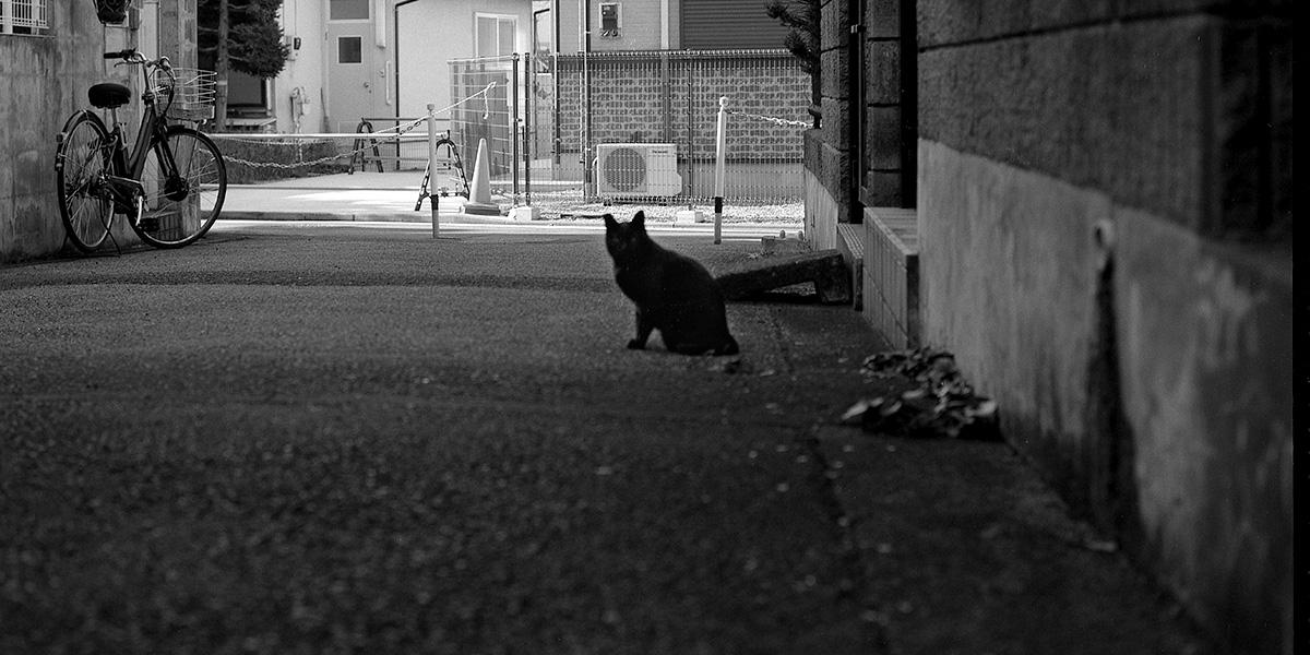 猫ラベルのCatLABS X FILM 80を使ってみた|ROLLEIFLEX 2.8F + CatLABS X FILM 80